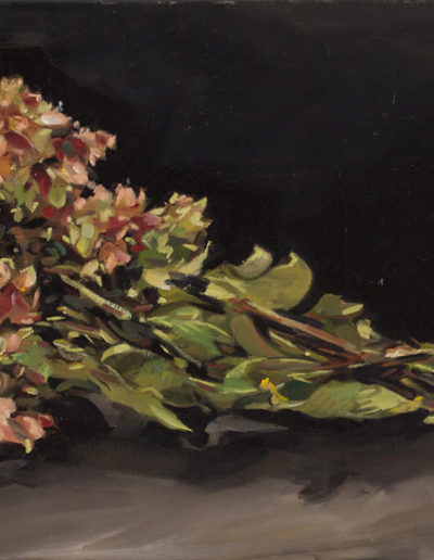 Hortensias bretons